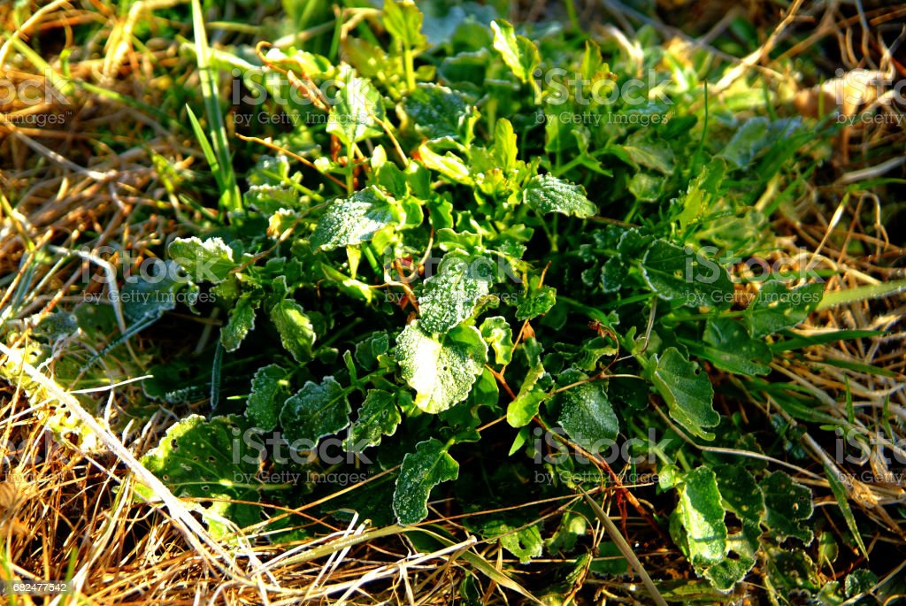 The grass in the garden, covered with frost Стоковые фото Стоковая фотография