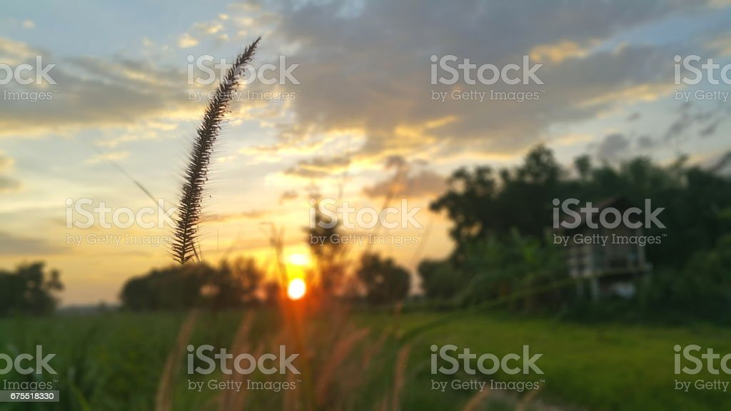 The grass in the park before sunset. royalty-free stock photo