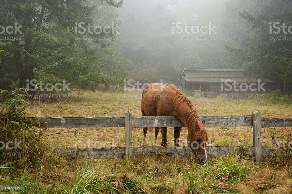 The grass is always greener... royalty-free stock photo