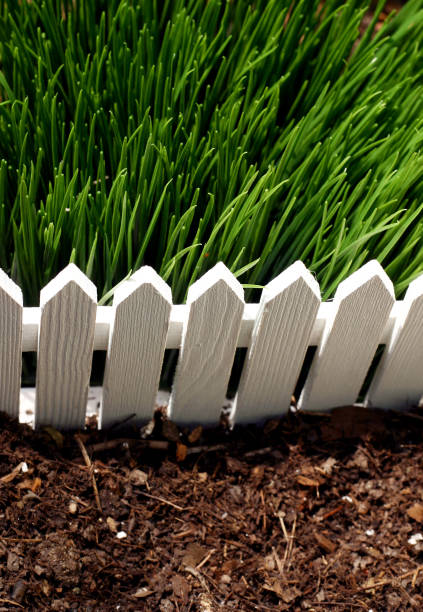 The Grass is Greener stock photo