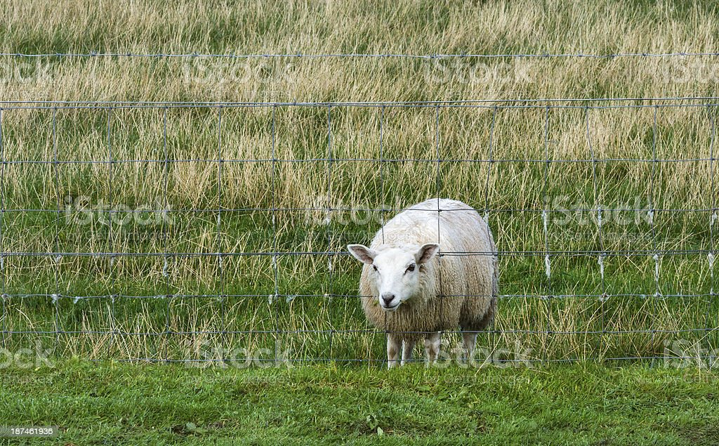 The grass is greener !! stock photo