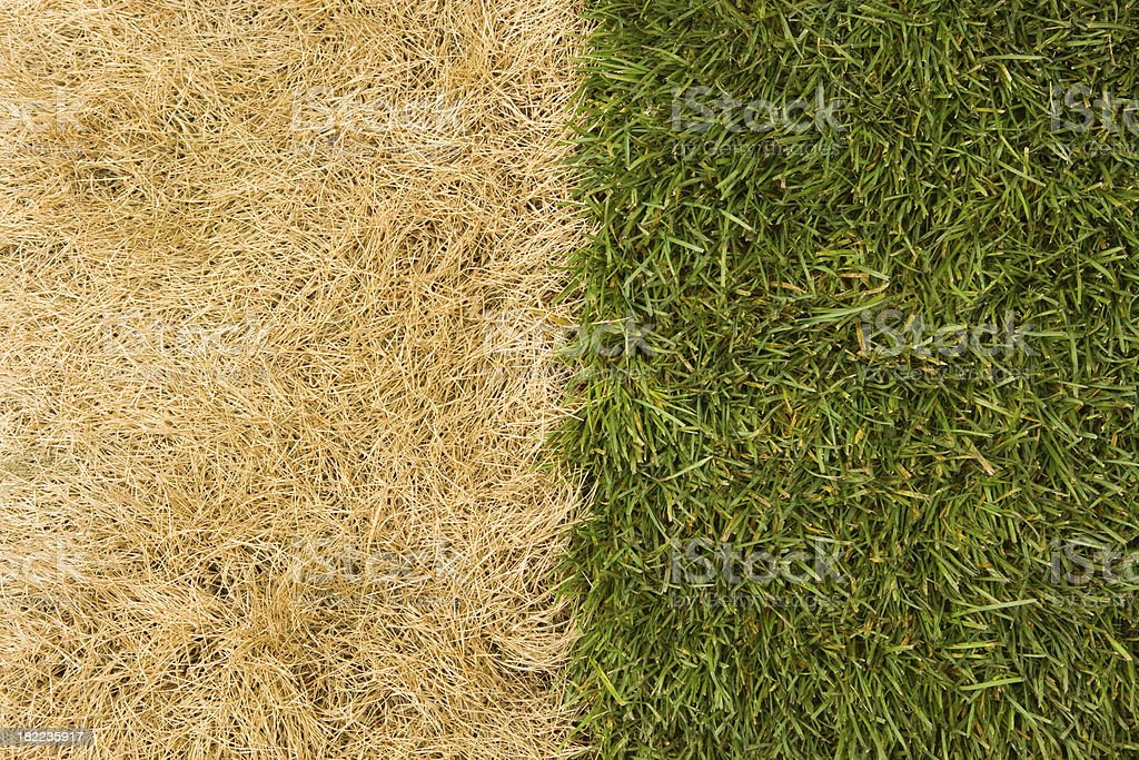 The Grass is Much Greener on Other Side stock photo