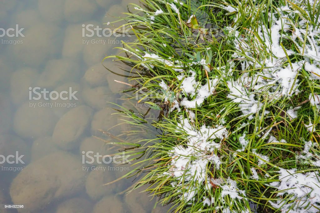 The grass nearby turbid lake that have rocks in the bottom stock photo