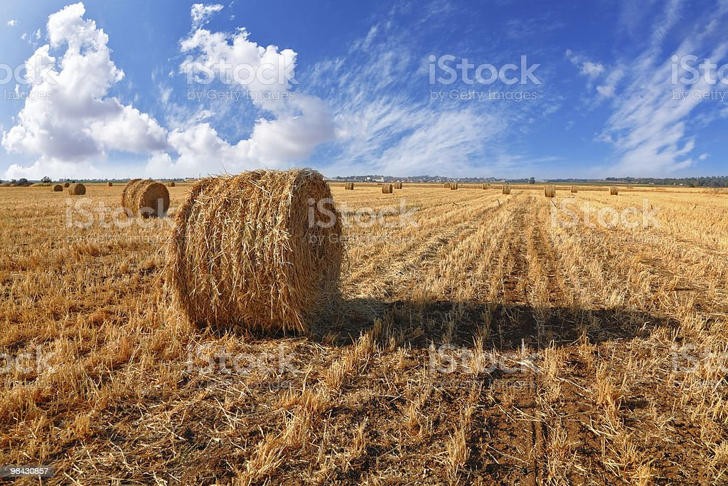 The grass on a sunset royalty-free stock photo