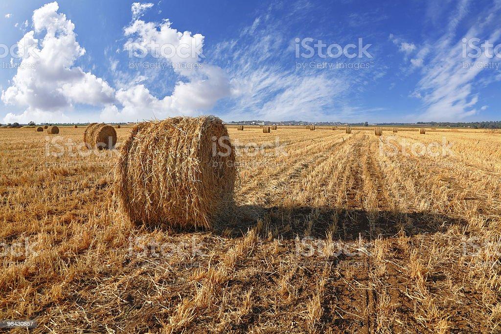 The grass 한 해질녘까지 royalty-free 스톡 사진