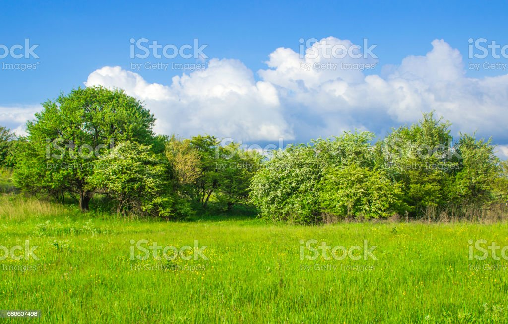 The grassy clearing went to trees with a blue sky and white clouds royalty-free stock photo