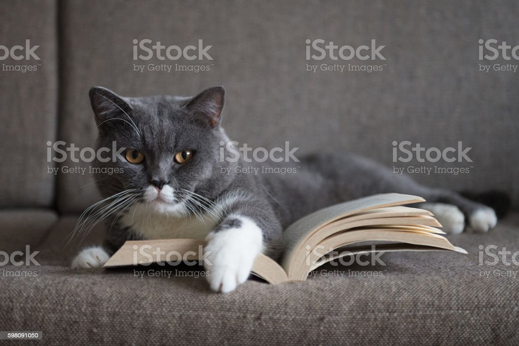 The gray cat is reading a book - foto de acervo