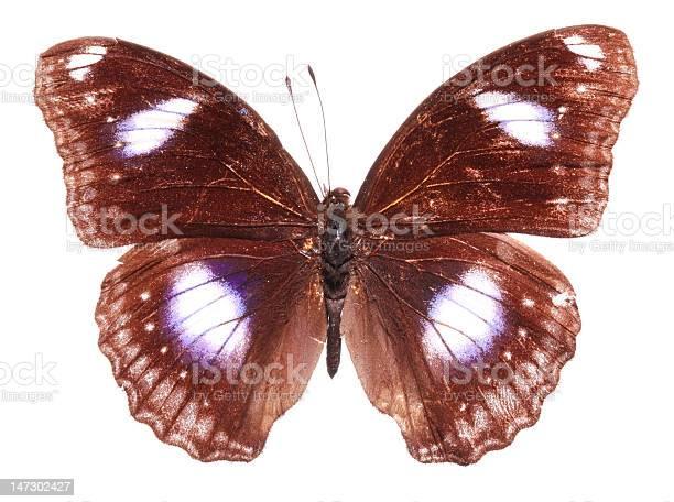 The great eggfly butterfly picture id147302427?b=1&k=6&m=147302427&s=612x612&h=b11ljqwwisdc22wygapwykz8jeaxjumof22a0x j7i8=