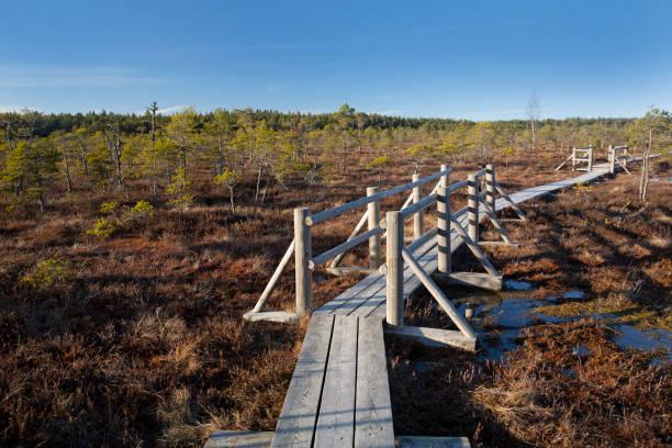 The Great Kemeri Raised bog Bog Boardwalk in the spring stock photo