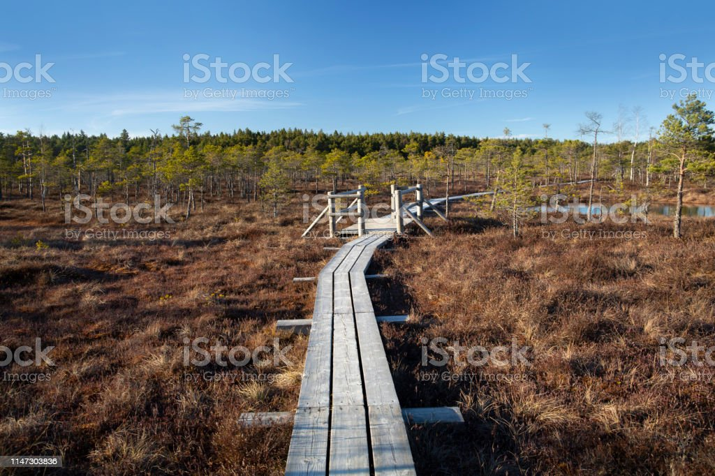 The Great Kemeri Raised bog Bog Boardwalk in the spring - Royalty-free Baltic Countries Stock Photo
