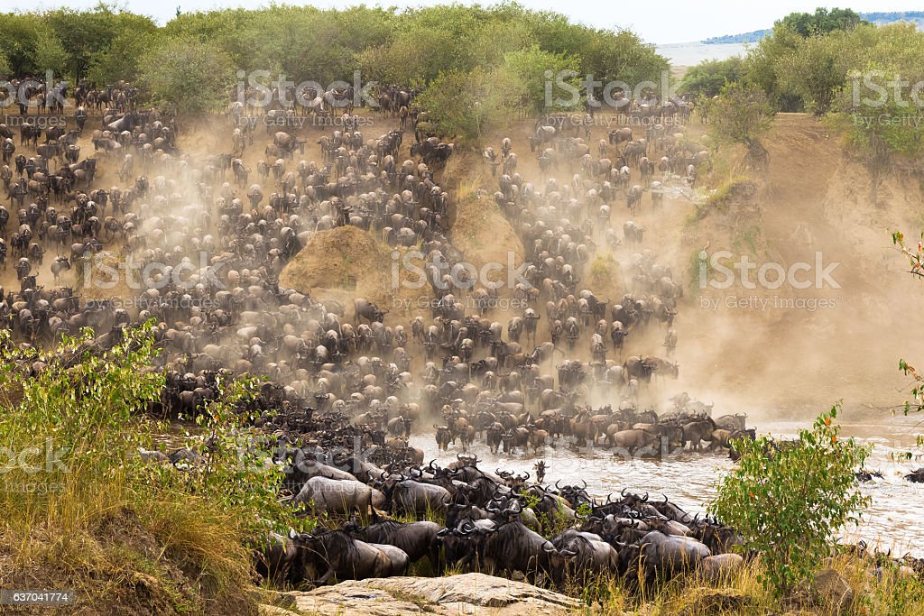 The great migration at the height. Africa, Kenya stock photo