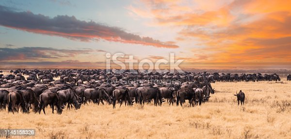 This photo was taken during the game drive safari in Serengeti national park ,Tanzania. There were a lot of wildebeest migrate to Kenya and looking for the river.