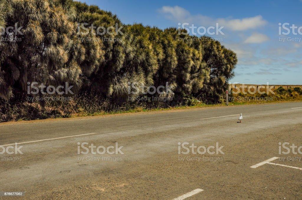 The great ocean road. Australia. Victoria stock photo