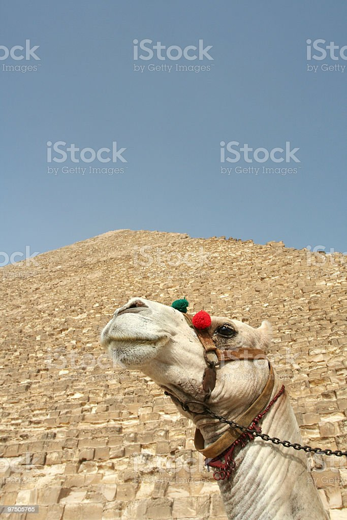 The great sites of Egypt royalty-free stock photo
