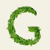 The green tea leaf, letter G from tea on white background, top view