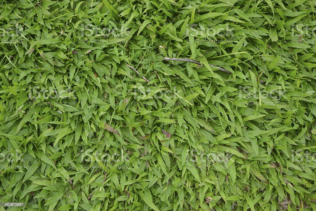The Green Grass Pattern stock photo