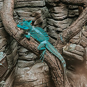 The green lizard is warming up under the lamp at the zoo