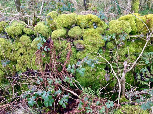 the green moss wall - mcdermp stock photos and pictures