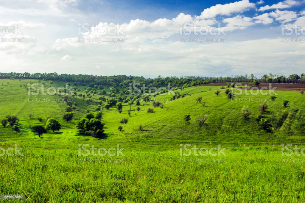 The green steppe near the outgoing forest field royalty-free stock photo