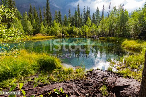 The green thermal lake near Aktash, Altai mountains. Picturesque landscape with coniferous trees. Summer concept