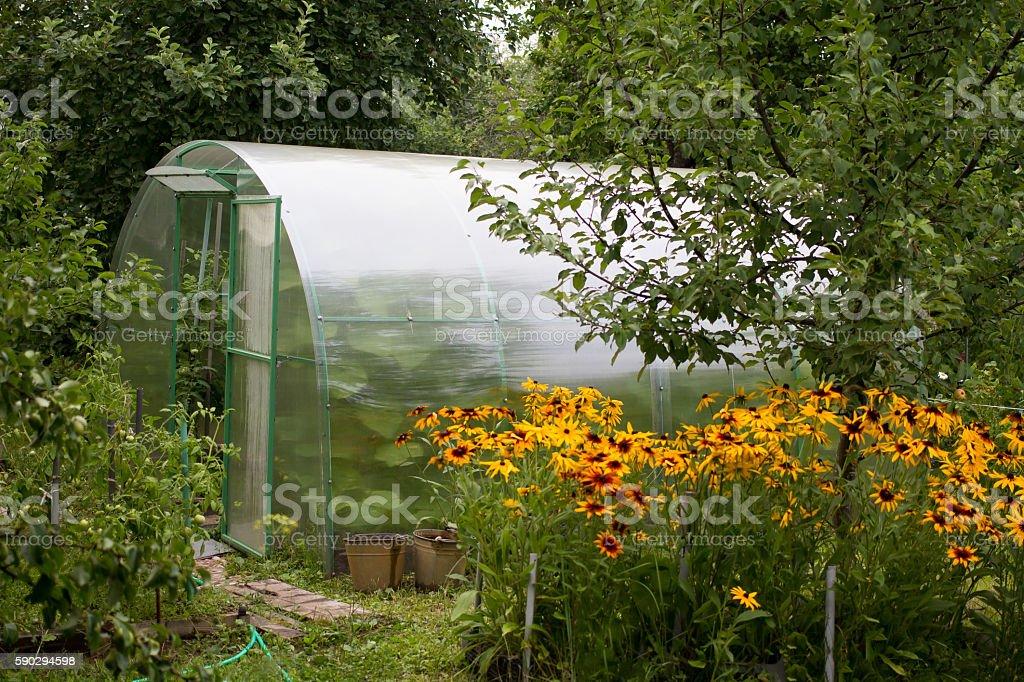 The greenhouse in royaltyfri bildbanksbilder