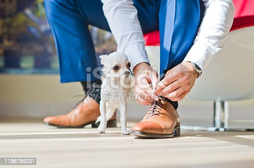 The groom wears shoes in the company of his dog, a close plan. Wedding celebration