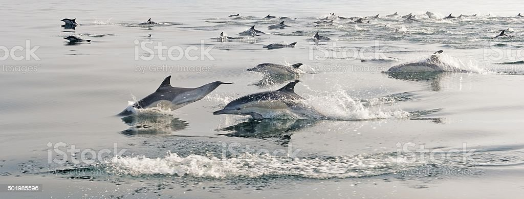 The Group of dolphins stock photo