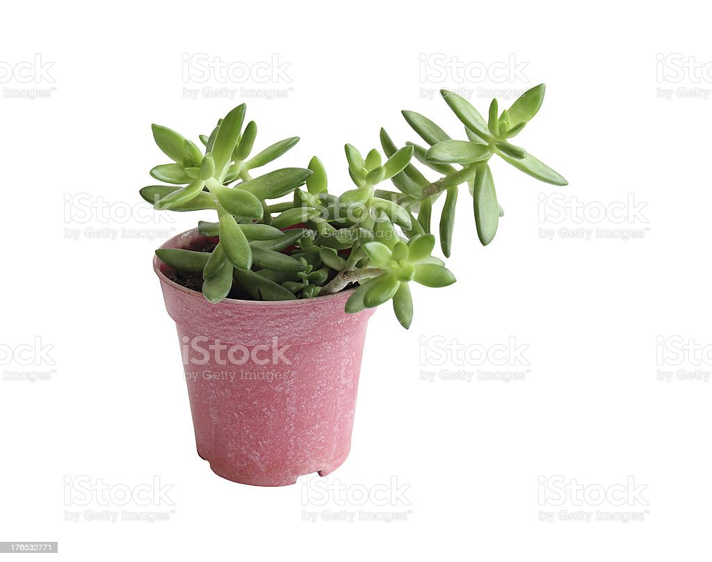 The growing popularity of small tree in Thailand stock photo