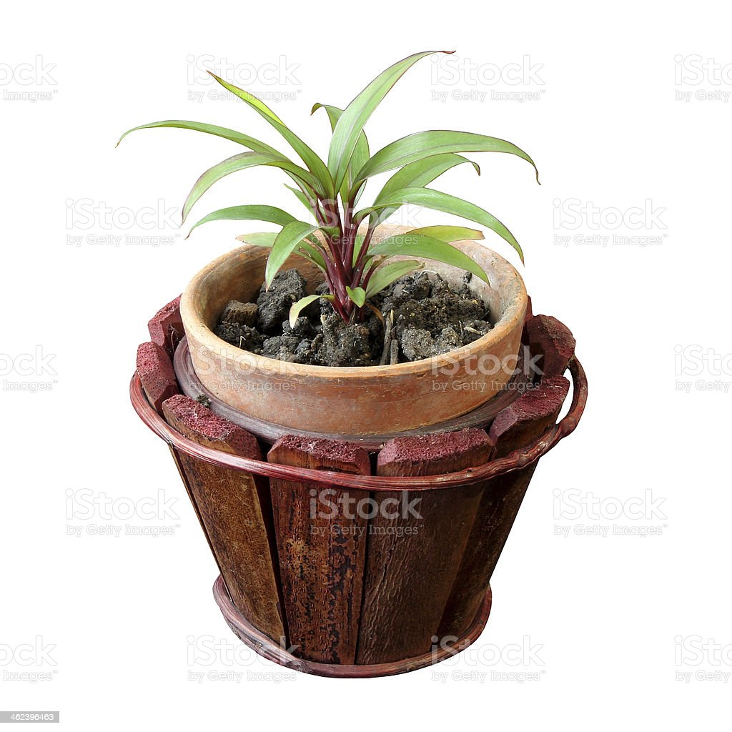The growing popularity of small tree, Thailand stock photo