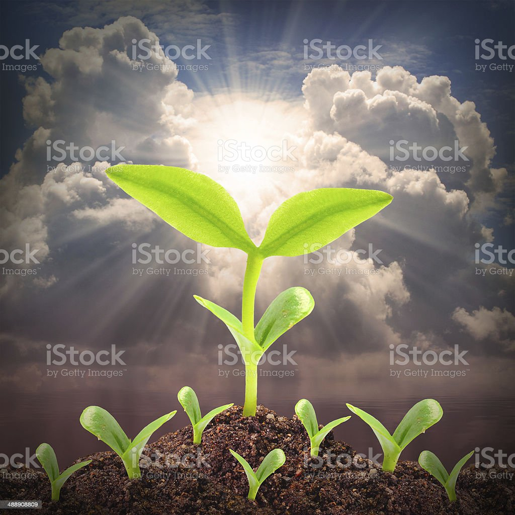 The Growth. stock photo