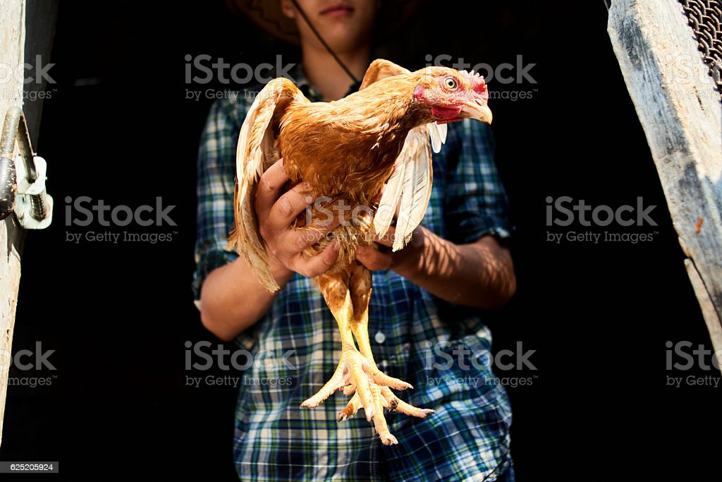 The guy in the chicken coop holding a chicken – Foto