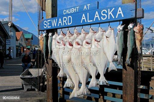 istock SEWARD, ALASKA, USA, JULY 18, 2014: The halibuts caught at Seward Alaska were hook for weighing in Seward, Alaska, USA on July 18, 2014 904000454