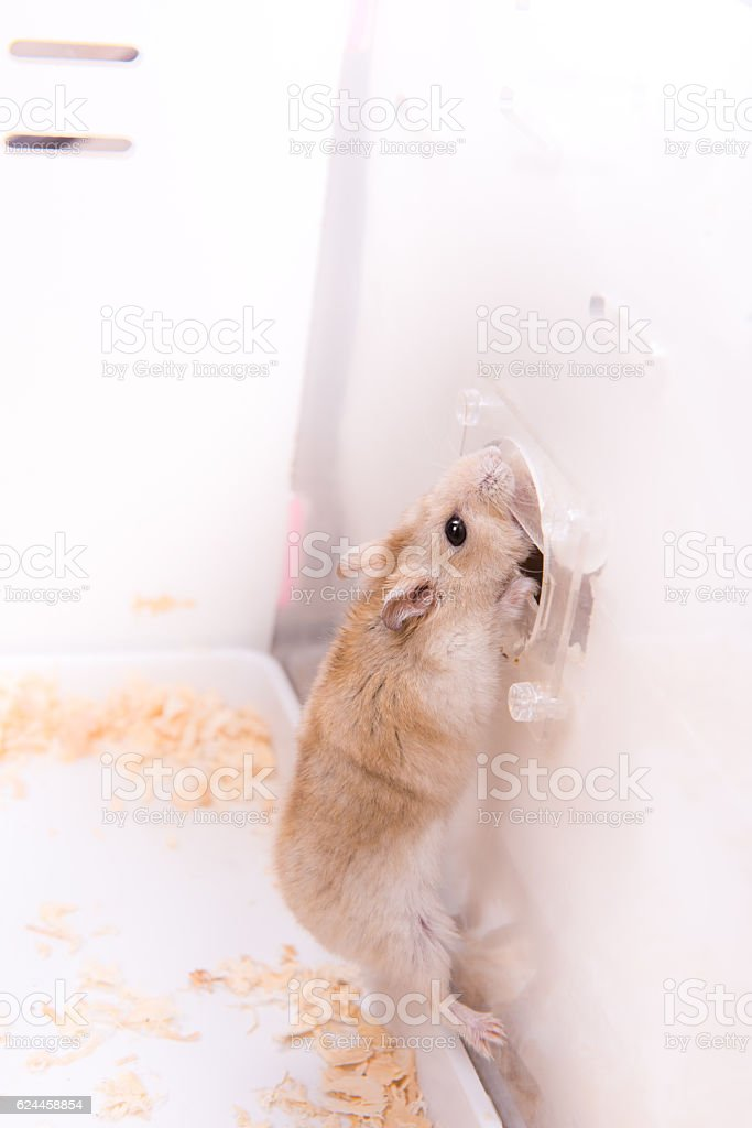 The Hamster In A Cage Stock Photo - Download Image Now - iStock