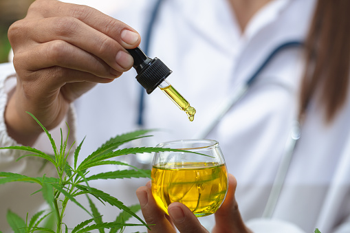 1177762728 istock photo The hands of scientists dropping cannabis oil for experimenting and researching medicinal plants, ecology, marijuana, cbd oil, medicine from a glass bottle. 1219918078