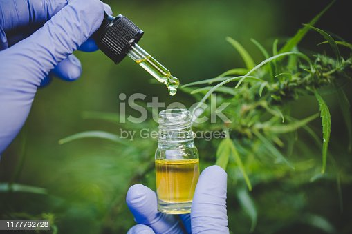 istock The hands of scientists dropping marijuana oil for experimentation and research, ecological hemp plant herbal pharmaceutical cbd oil from a jar. 1177762728
