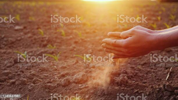 The hands of the young farmer keep fertile soil on the field with picture id1133441881?b=1&k=6&m=1133441881&s=612x612&h=hjtcvfso6iipgc47shp70eikqj2sqjyhgftqujhxohk=