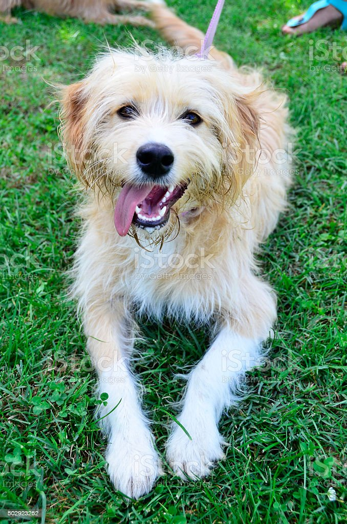 The happiest dog in the world stock photo