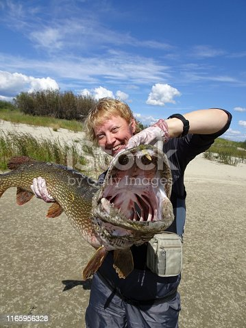 155674939istockphoto The happy fisherwoman holds in her hands a huge pike. Trophy catch. Good fishing. 1165956328