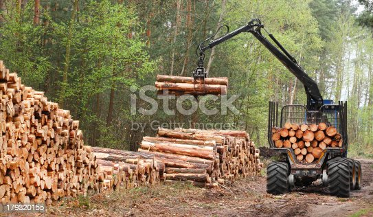 The harvester working in a forest. Renewable resources theme.