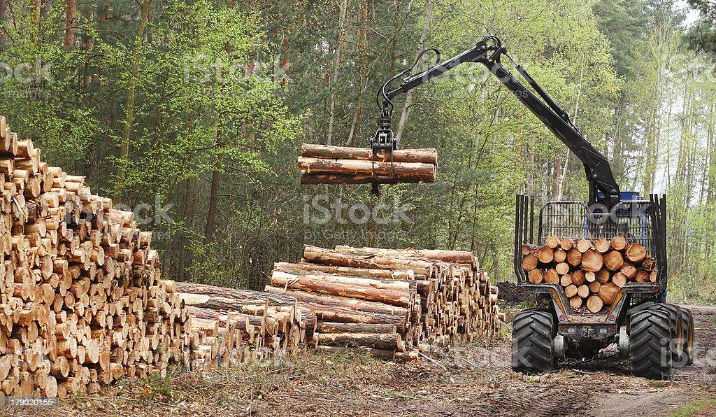 Im harvester Arbeit in einem Wald. – Foto