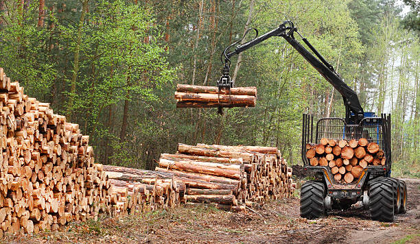 The harvester working in a forest. The harvester working in a forest. Renewable resources theme. deforestation stock pictures, royalty-free photos & images