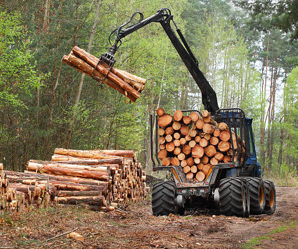 the harvester working in a forest. - logging equipment stock photos and pictures