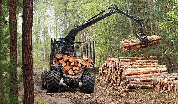 The harvester working in a forest. stock photo