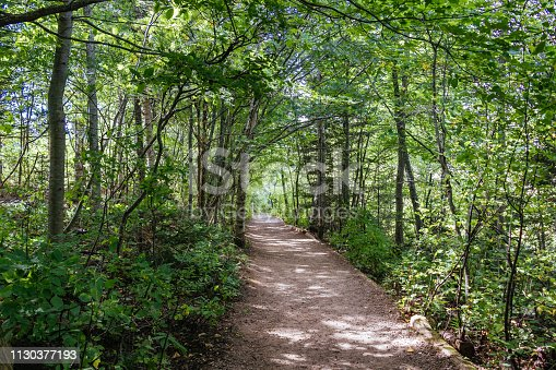 A serene pathway leads through the woods of the countryside setting located in Prince Edward Island National Park.
