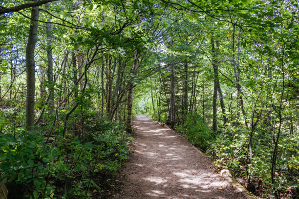 the haunted woods pathway through the forest in cavendish, prince edward island - prince edward island stock photos and pictures