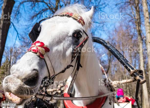 The head of a horse in a closeup harness picture id945887928?b=1&k=6&m=945887928&s=612x612&h=uagyj97h59gvkbqfuxvhwz5kxw 6ths ggub rahopo=