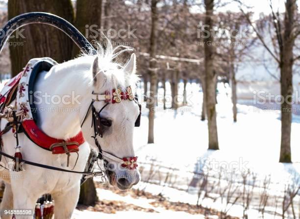 The head of a horse in a closeup harness picture id945888598?b=1&k=6&m=945888598&s=612x612&h=o1iuegsfryfj1wy  cluggqj4dzqdp3ebtod6fzrmv0=