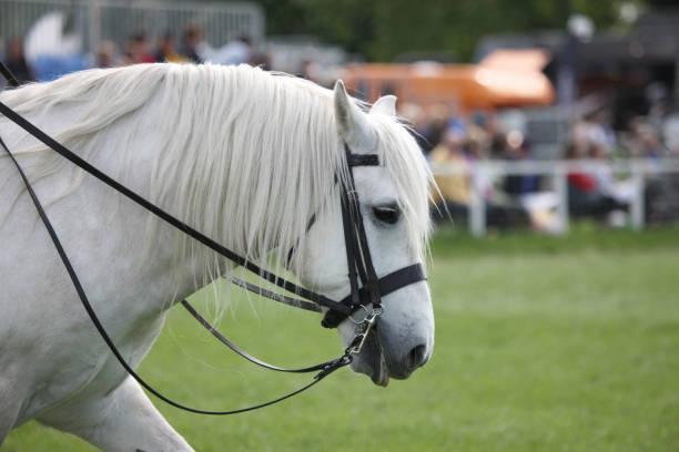Der Kopf eines weißen Pferdes – Foto