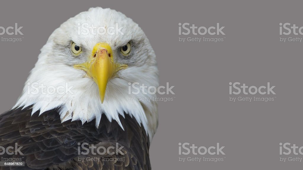 The Head Of The American Eagle Stock Photo
