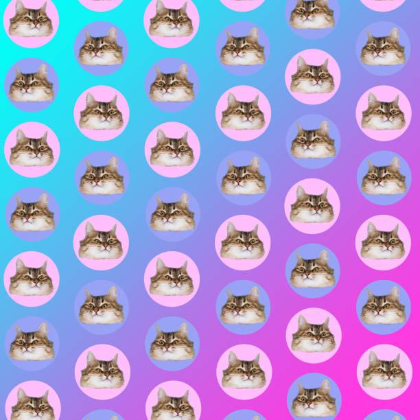las cabezas de los gatos en los círculos - cat vaporwave fotografías e imágenes de stock